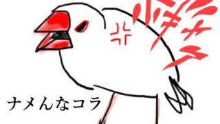怒った文鳥のイラスト